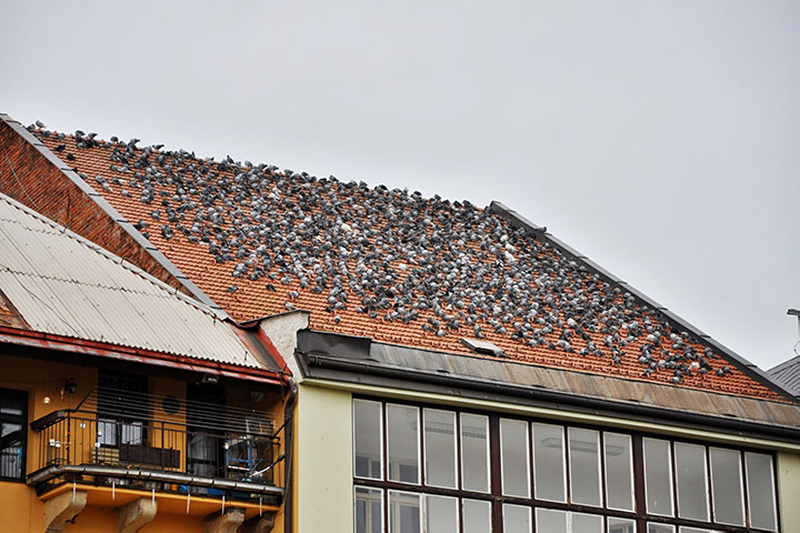 A2B Pest Control are able to install spikes to deter birds from roofs in Romford.