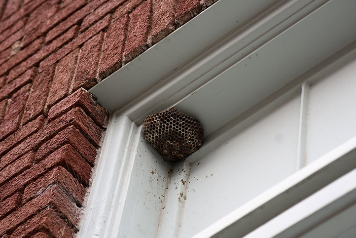 We provide a wasp nest removal service for domestic and commercial properties in Romford.